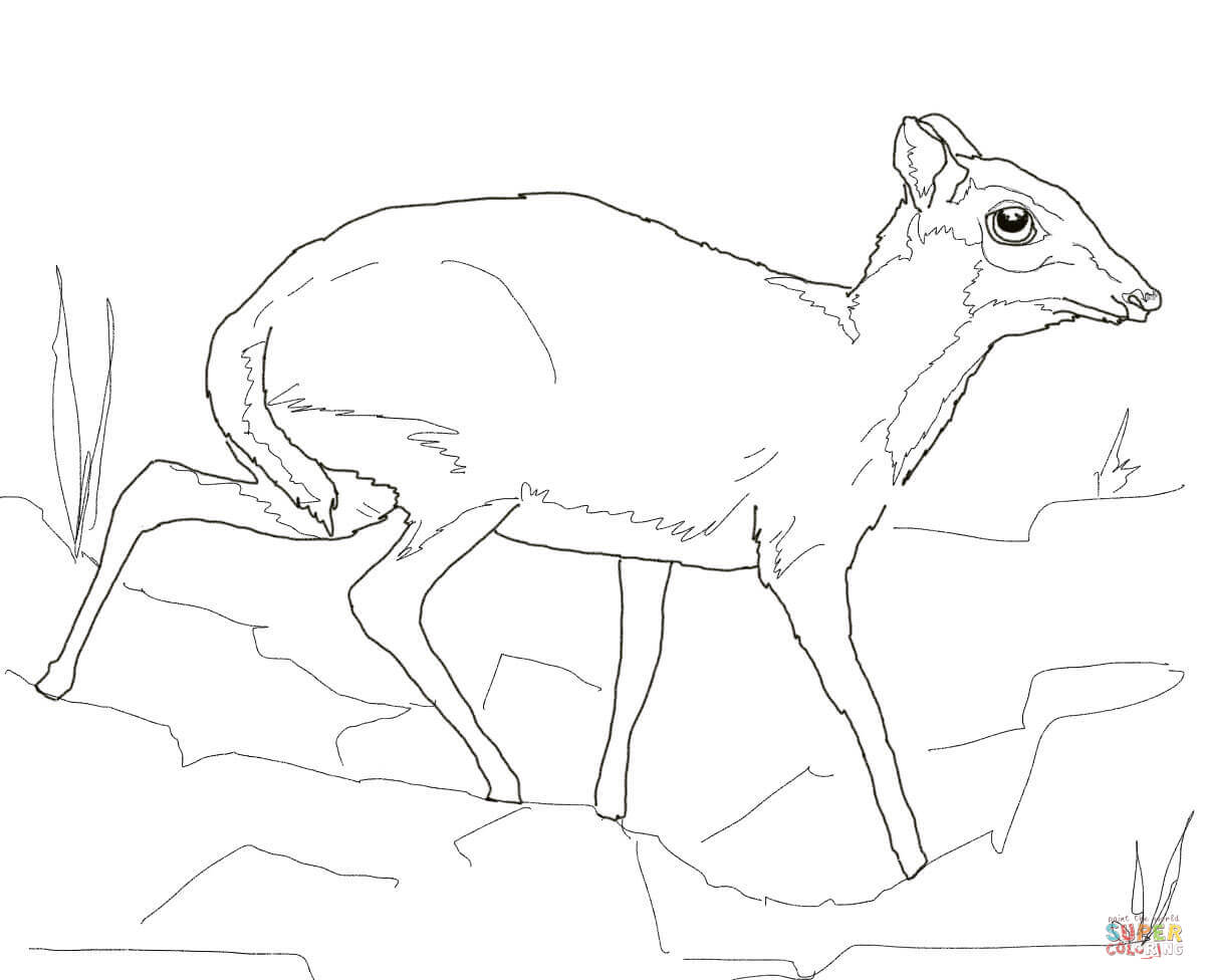 Lesser Mouse Deer Coloring Page