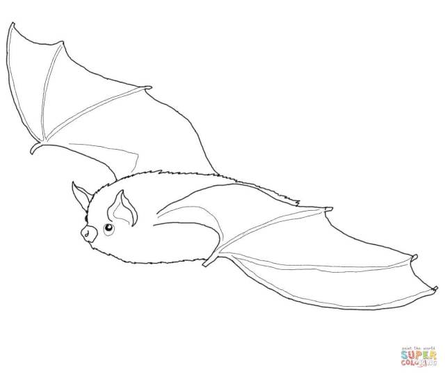 Little Brown Bat coloring page  Free Printable Coloring Pages