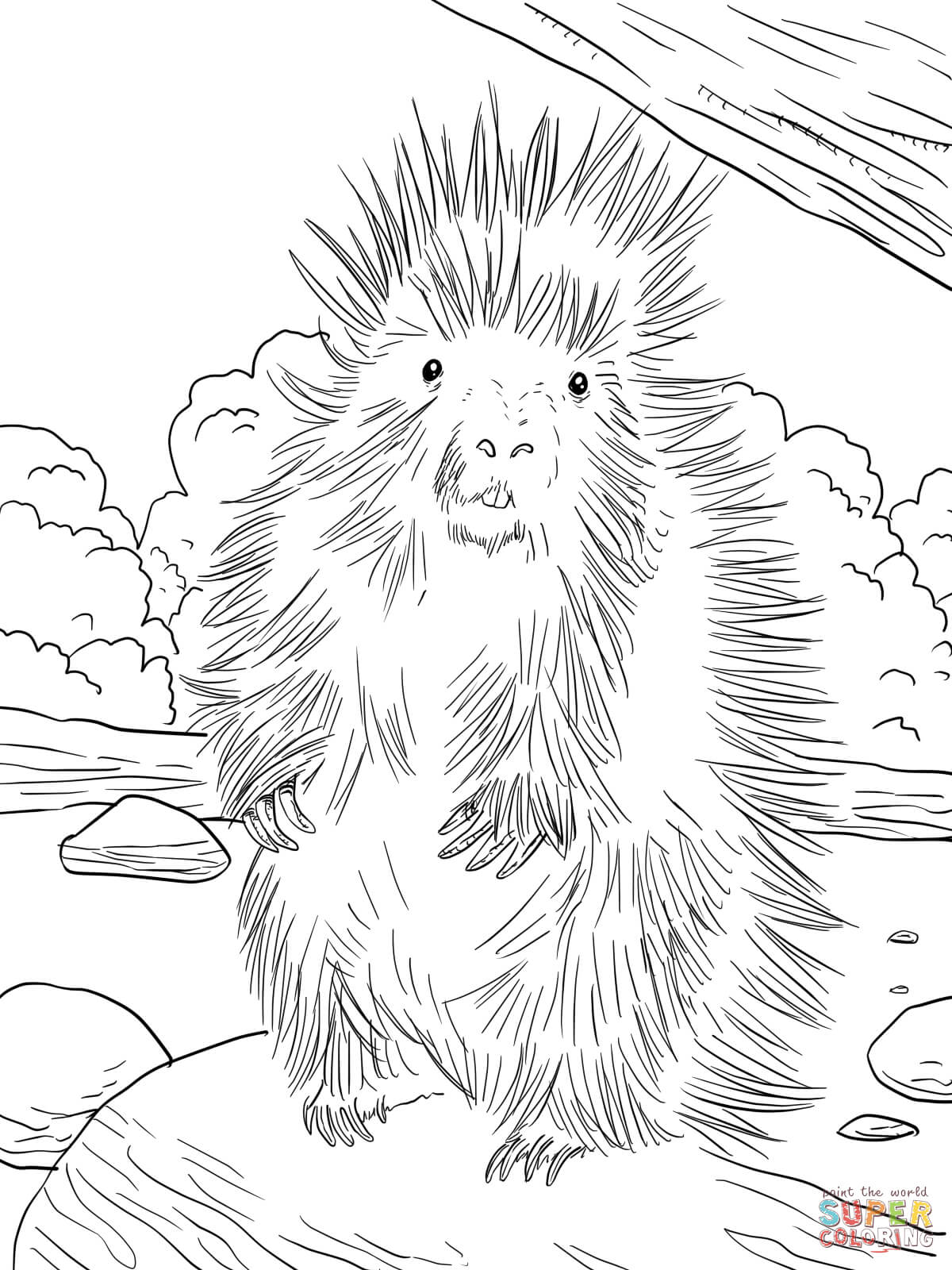 North American Porcupine Coloring Page