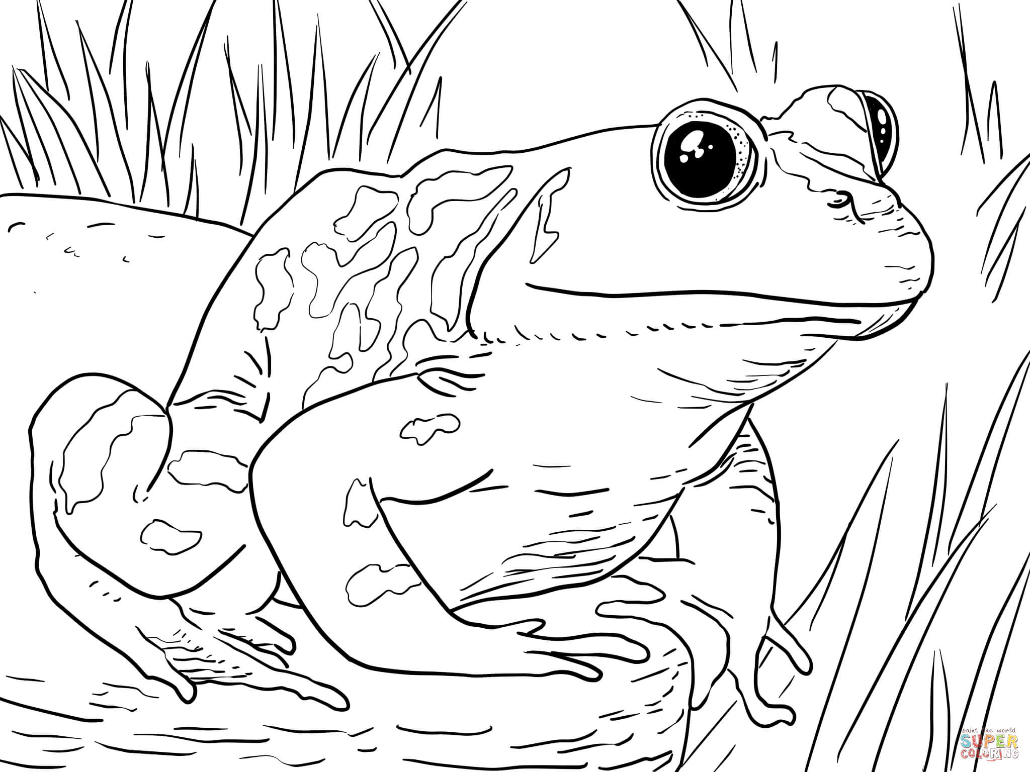 Adult Male American Bullfrog Coloring Page