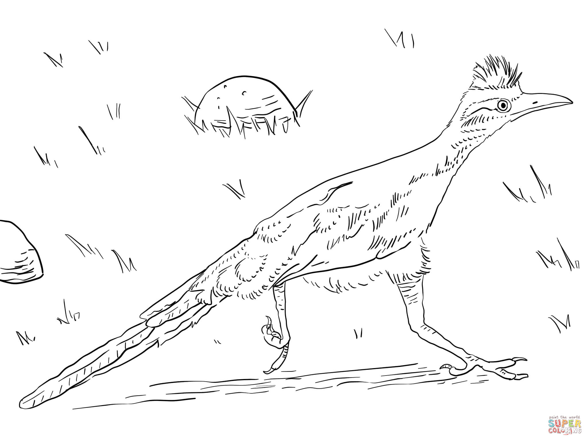 Greater Roadrunner Coloring Page