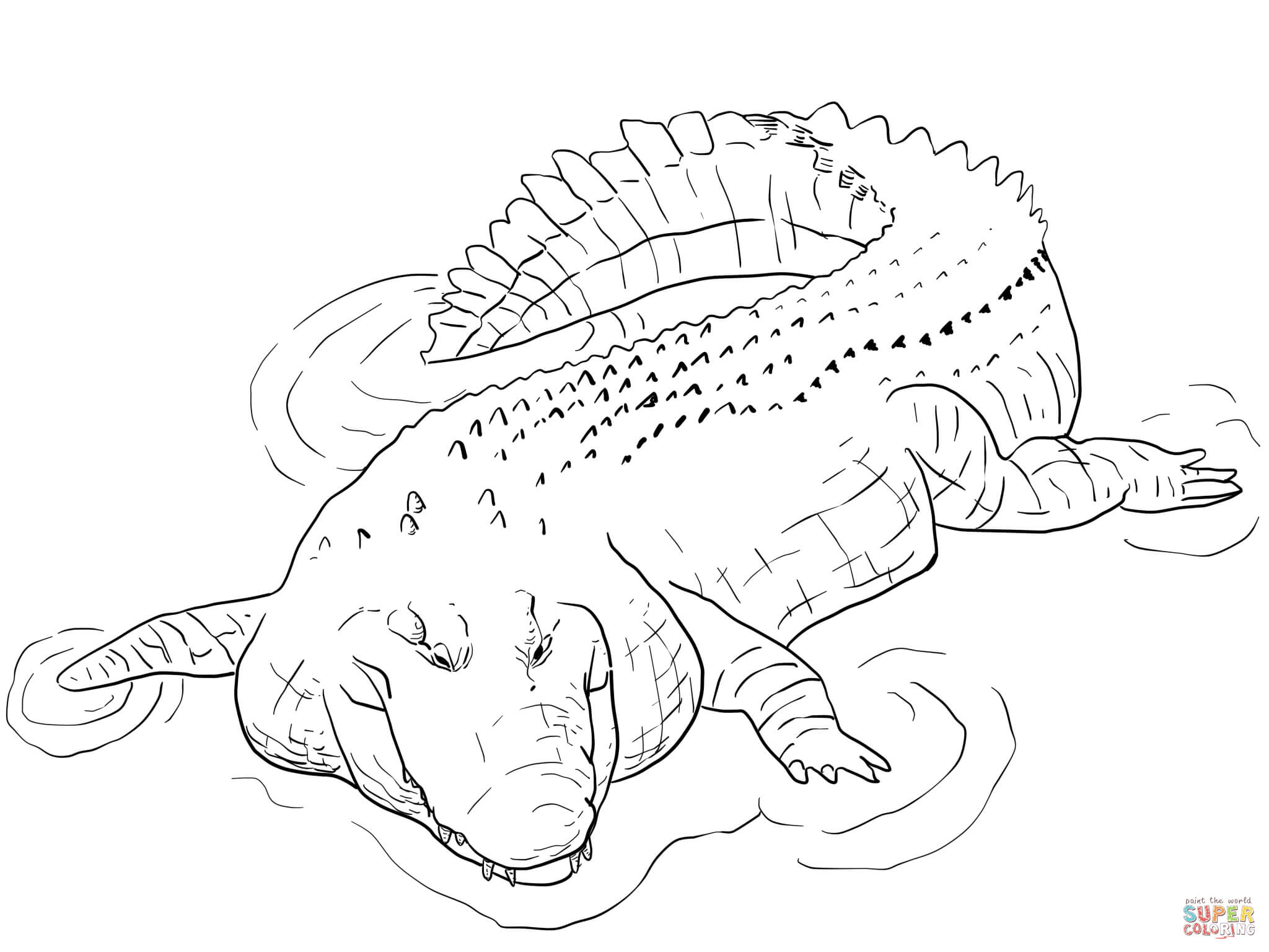 Indo Pacific Saltwater Crocodile Coloring Page