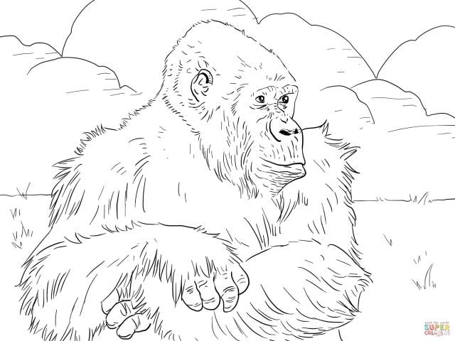 Mountain Gorilla coloring page  Free Printable Coloring Pages