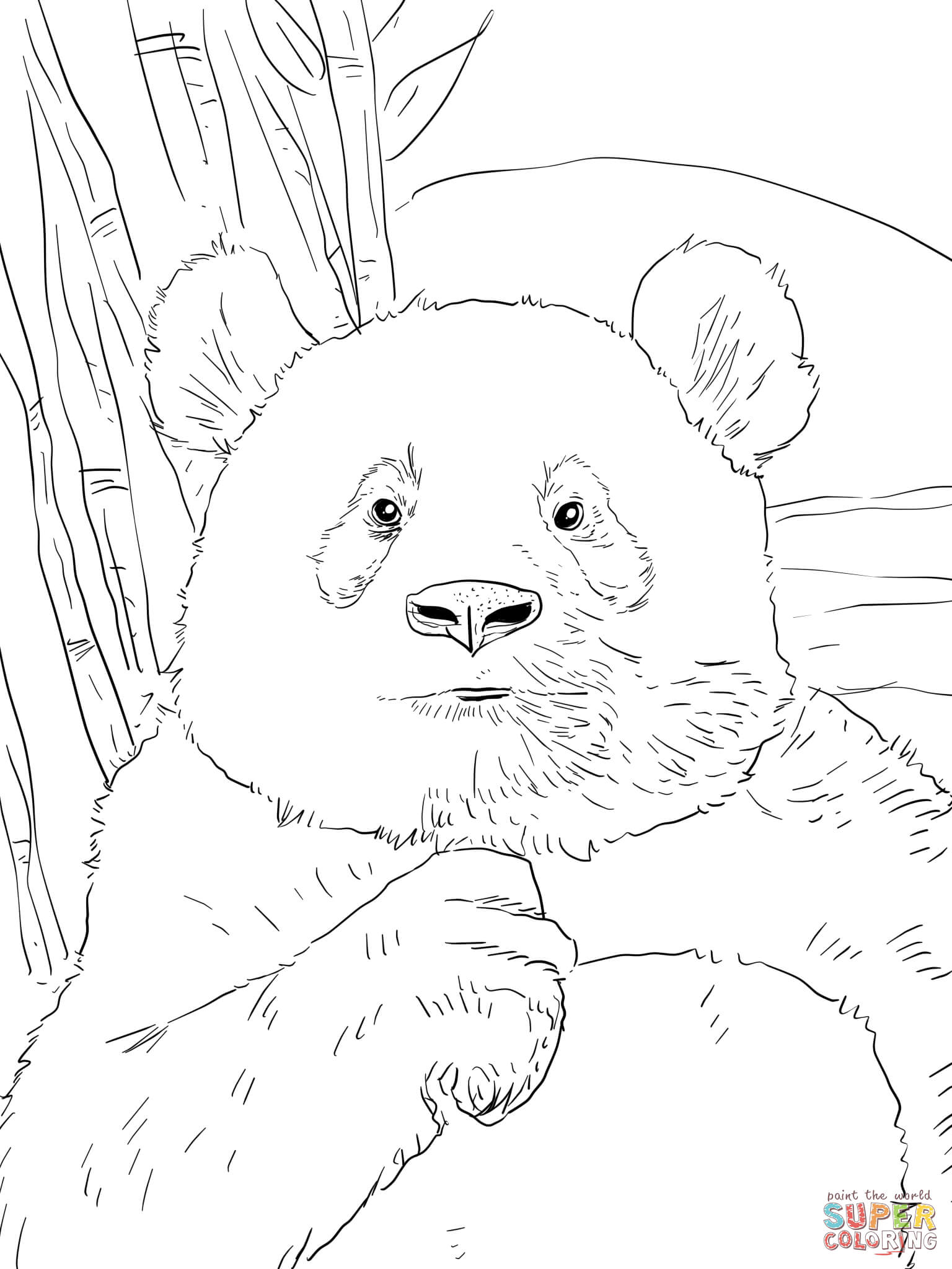 Panda Portr T Tegninger Til Print
