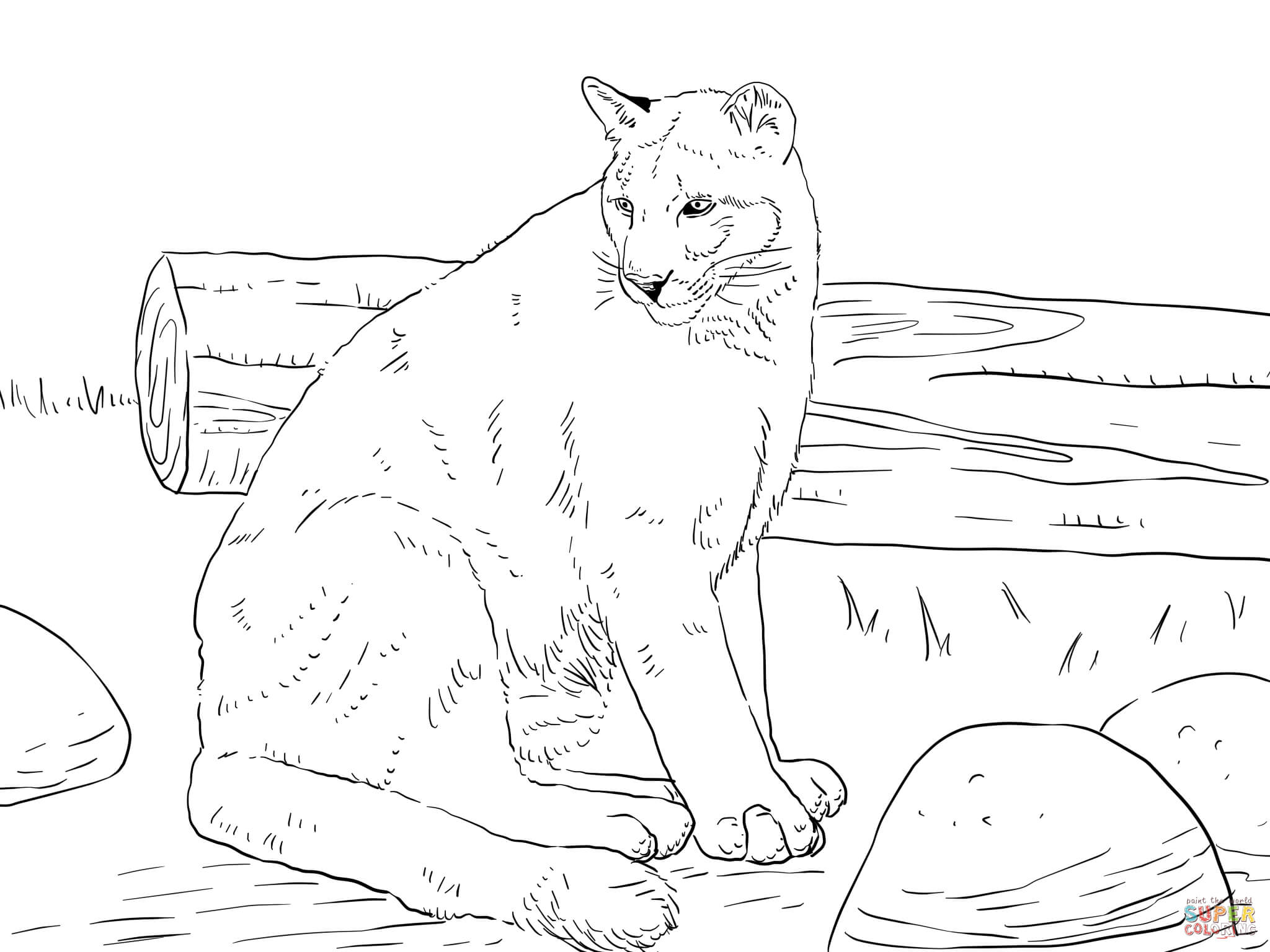Florida Panther Coloring Sheet Kids Coloring Pages Download