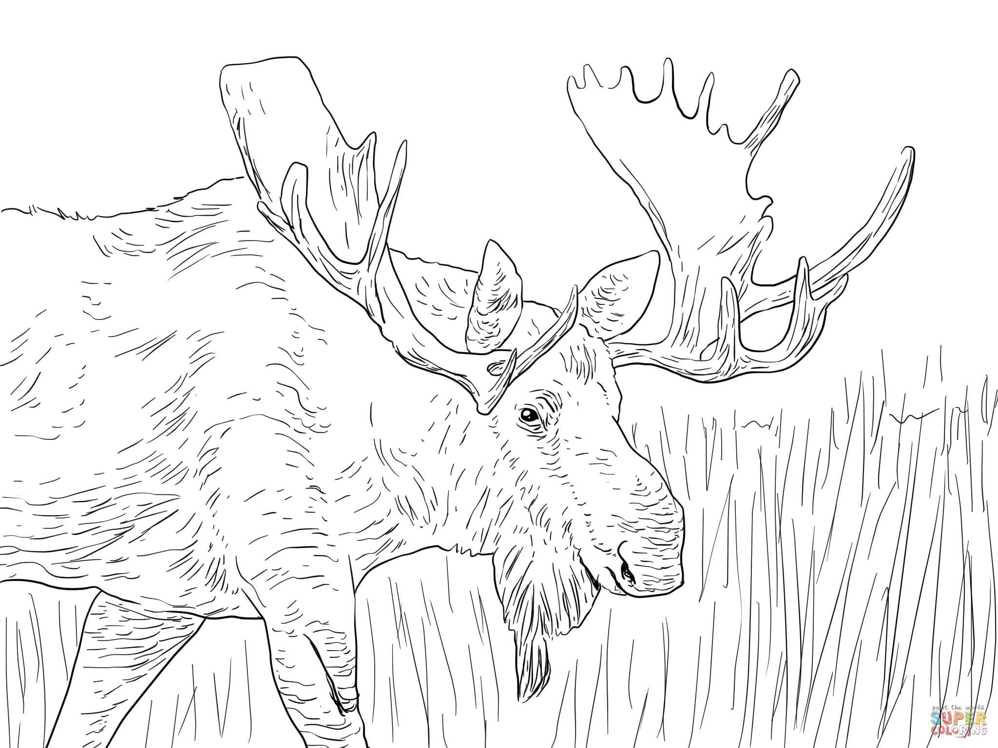 Dibujo De Alce De Alaska Para Colorear