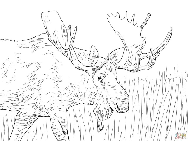 Alaska Moose coloring page  Free Printable Coloring Pages