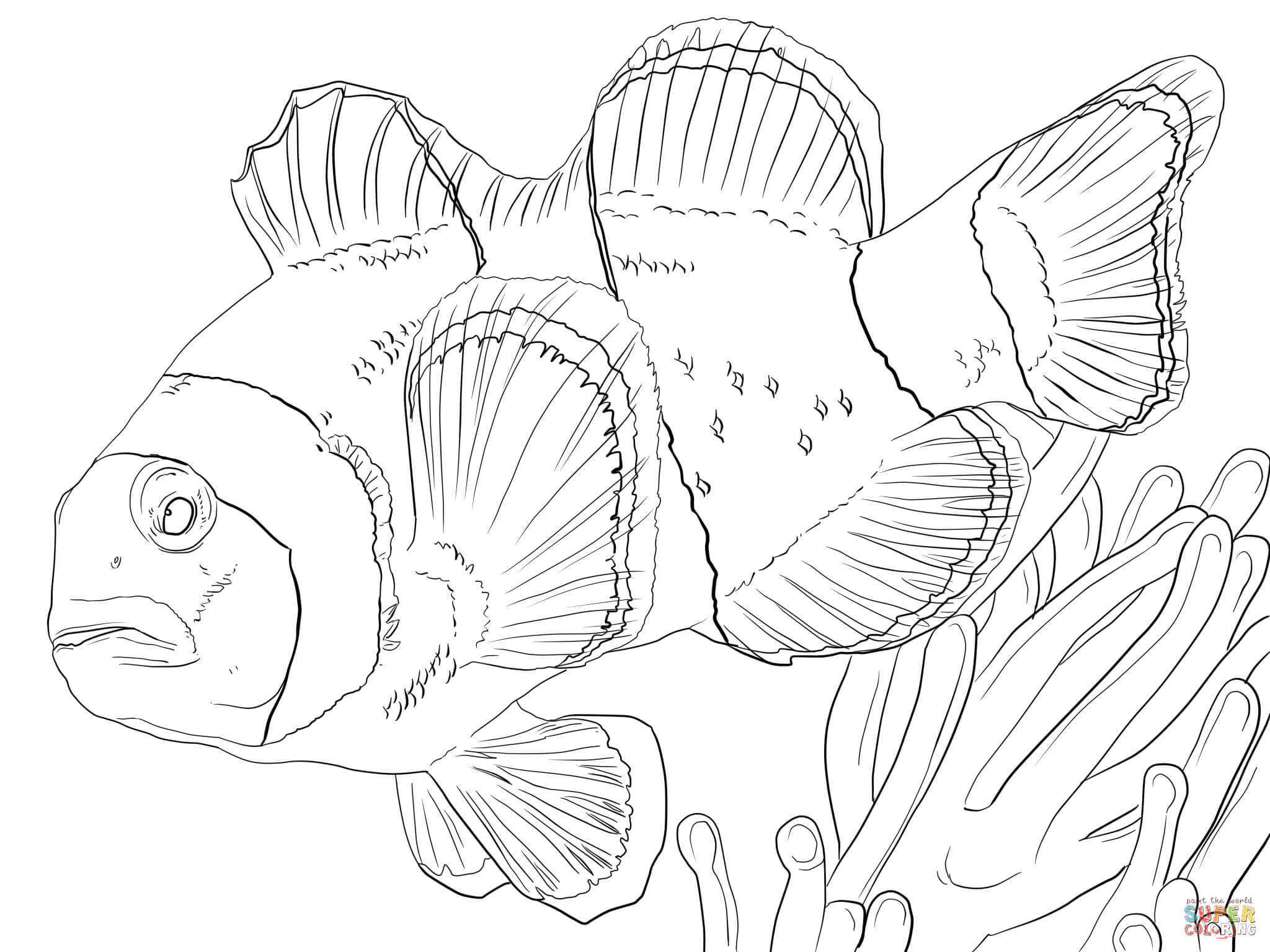 Clown Anemonefish Coloring Page Free Printable Coloring Pages