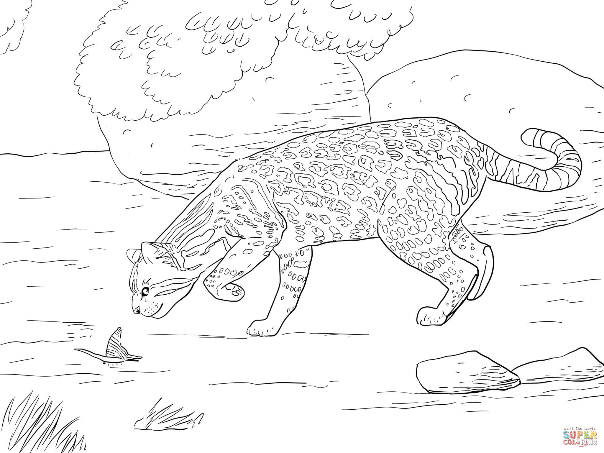 Ocelot And Butterfly Coloring Page