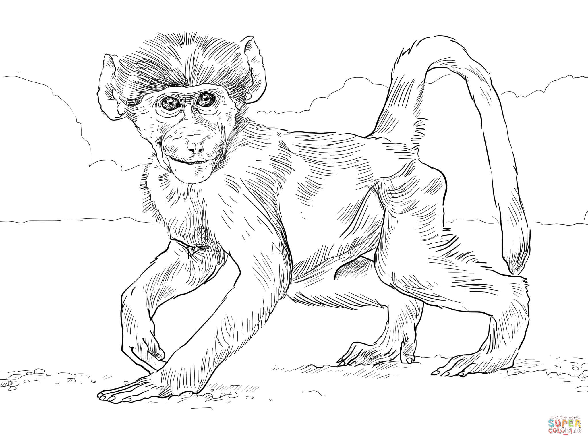 Chacma Baboon Baby Coloring Page