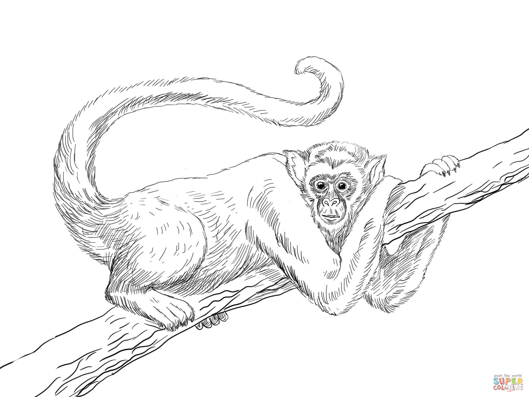 Black Headed Spider Monkey Coloring Page Free Printable Coloring
