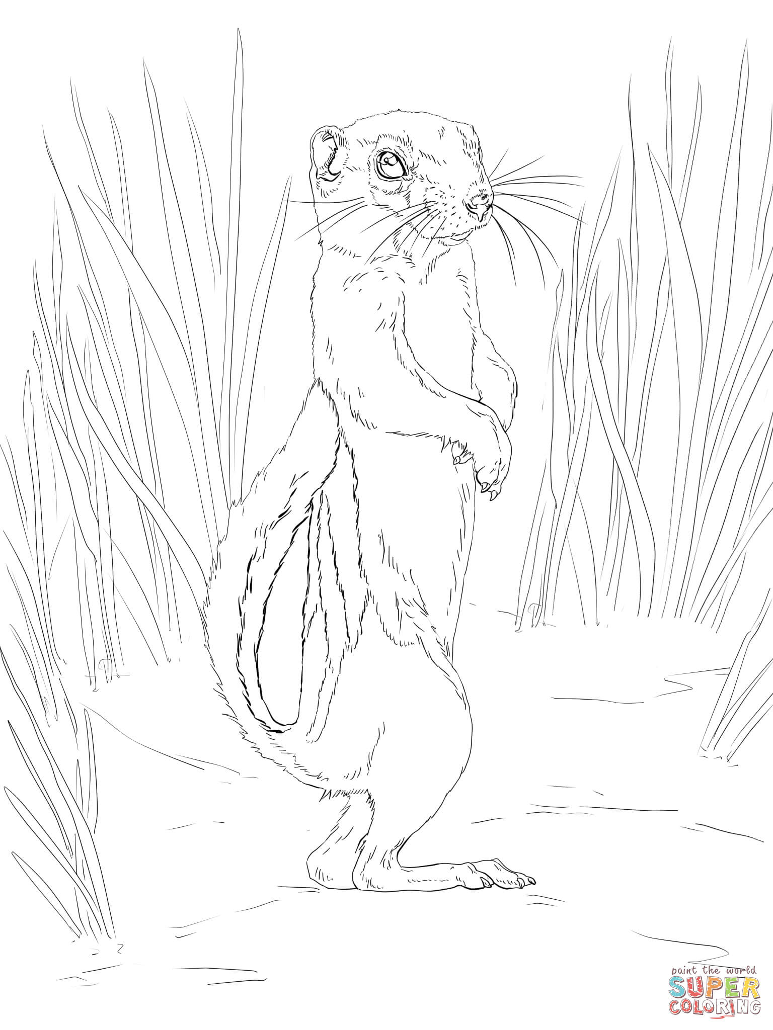 Antelope Squirrel Coloring Page