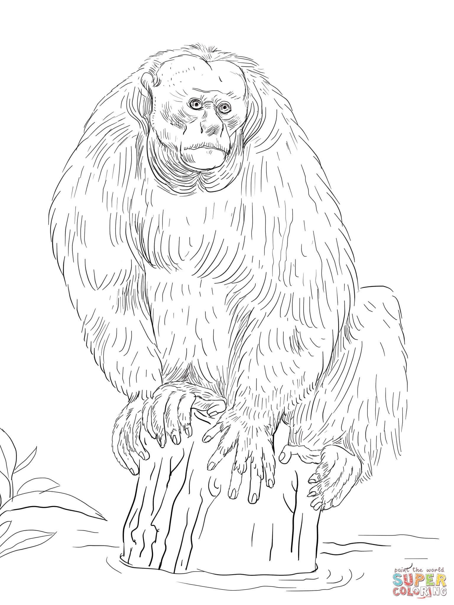 Bald Uakari Coloring Page