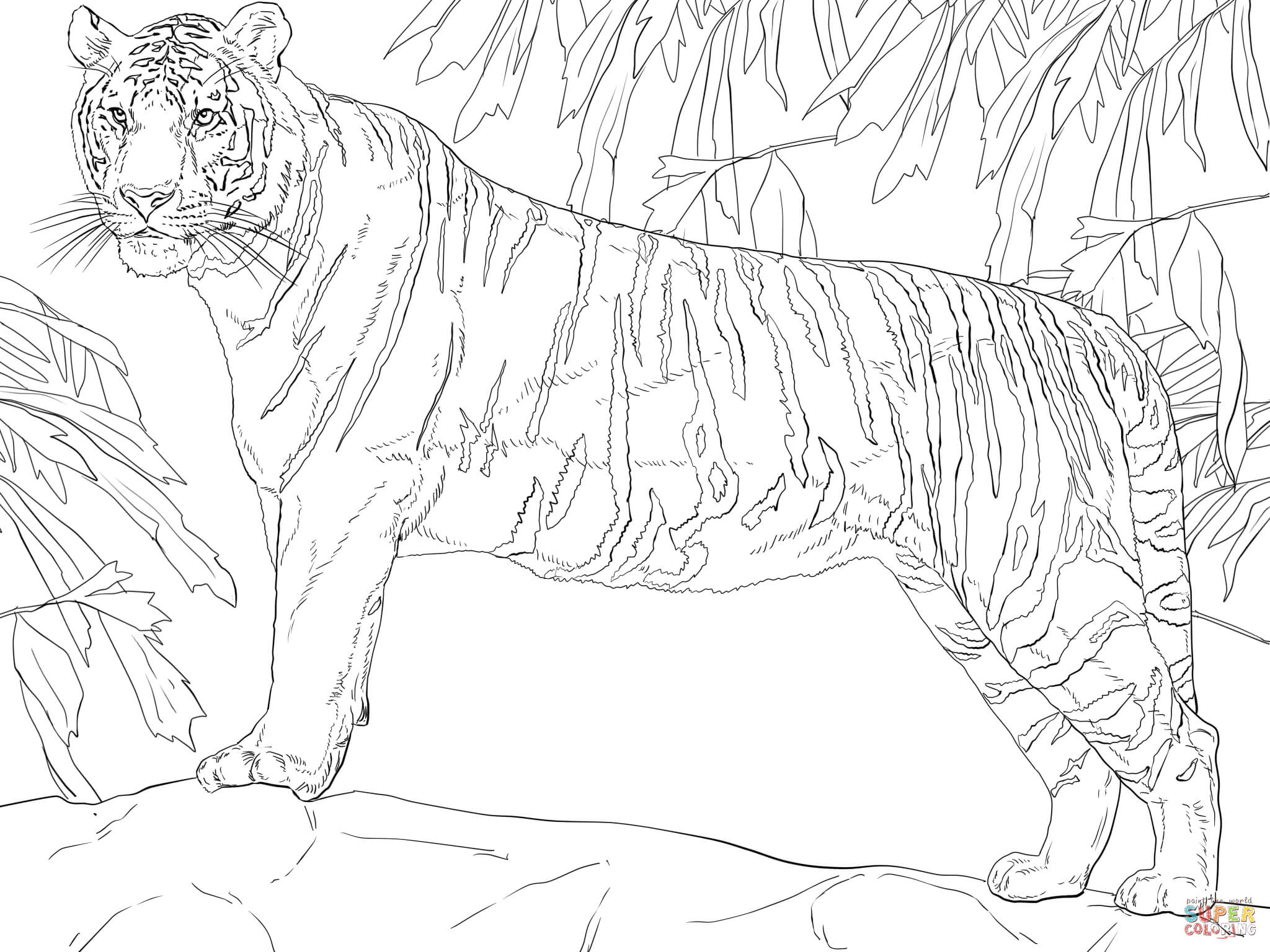 Standing Bengal Tiger Coloring Page