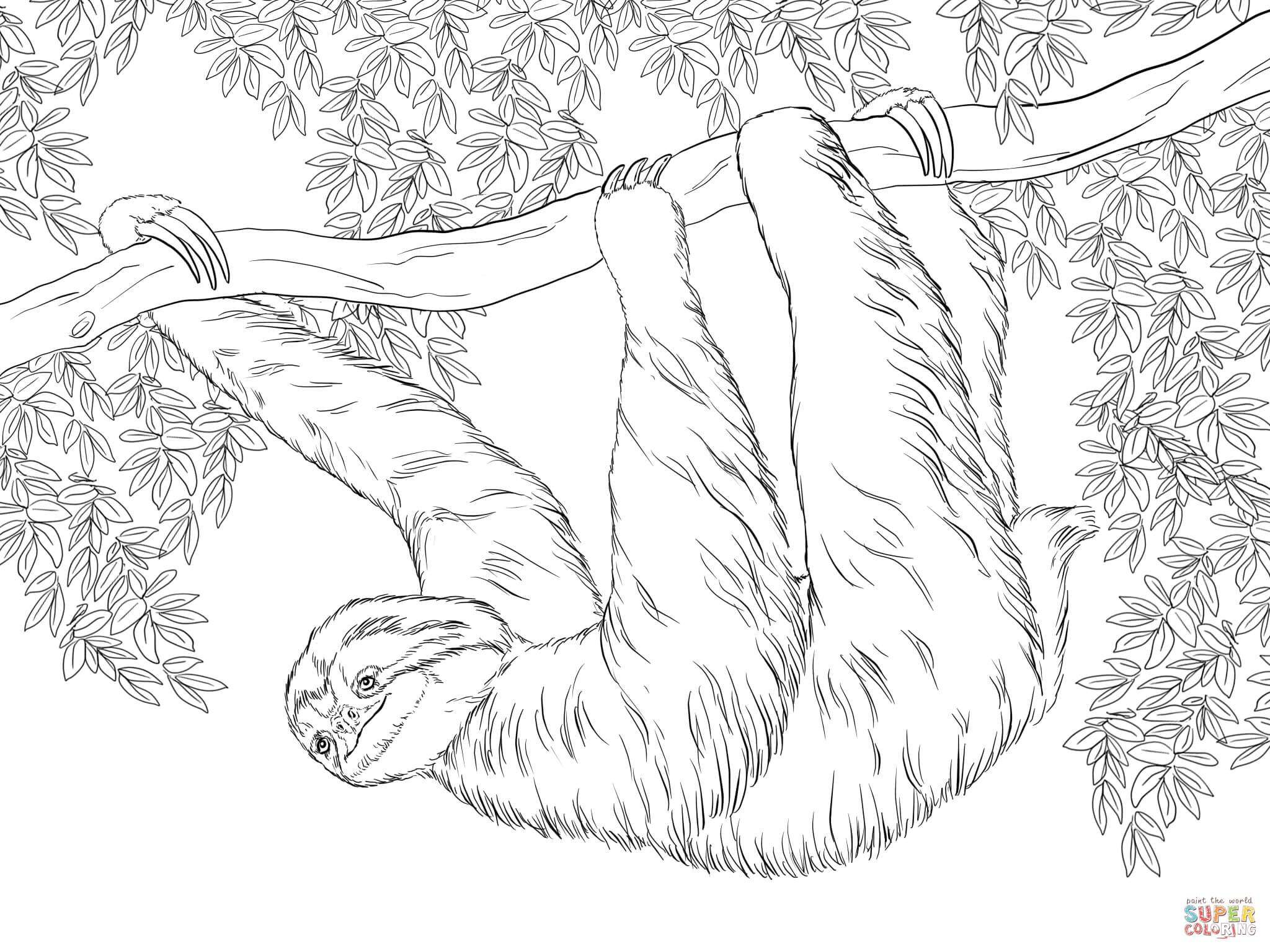Three Toed Sloth Hanging On Tree Coloring Page