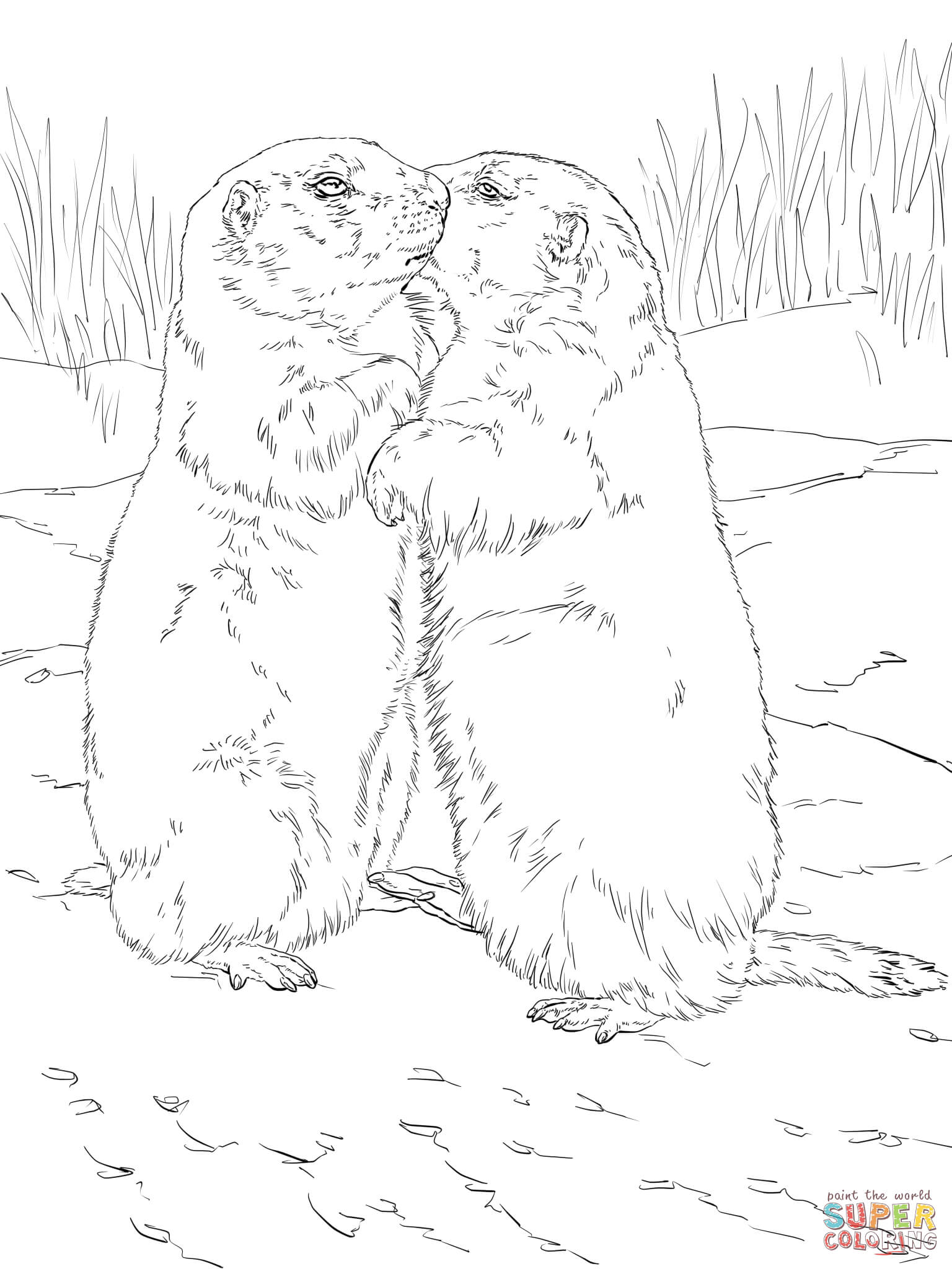 Prairie Dog Printable Coloring Pages