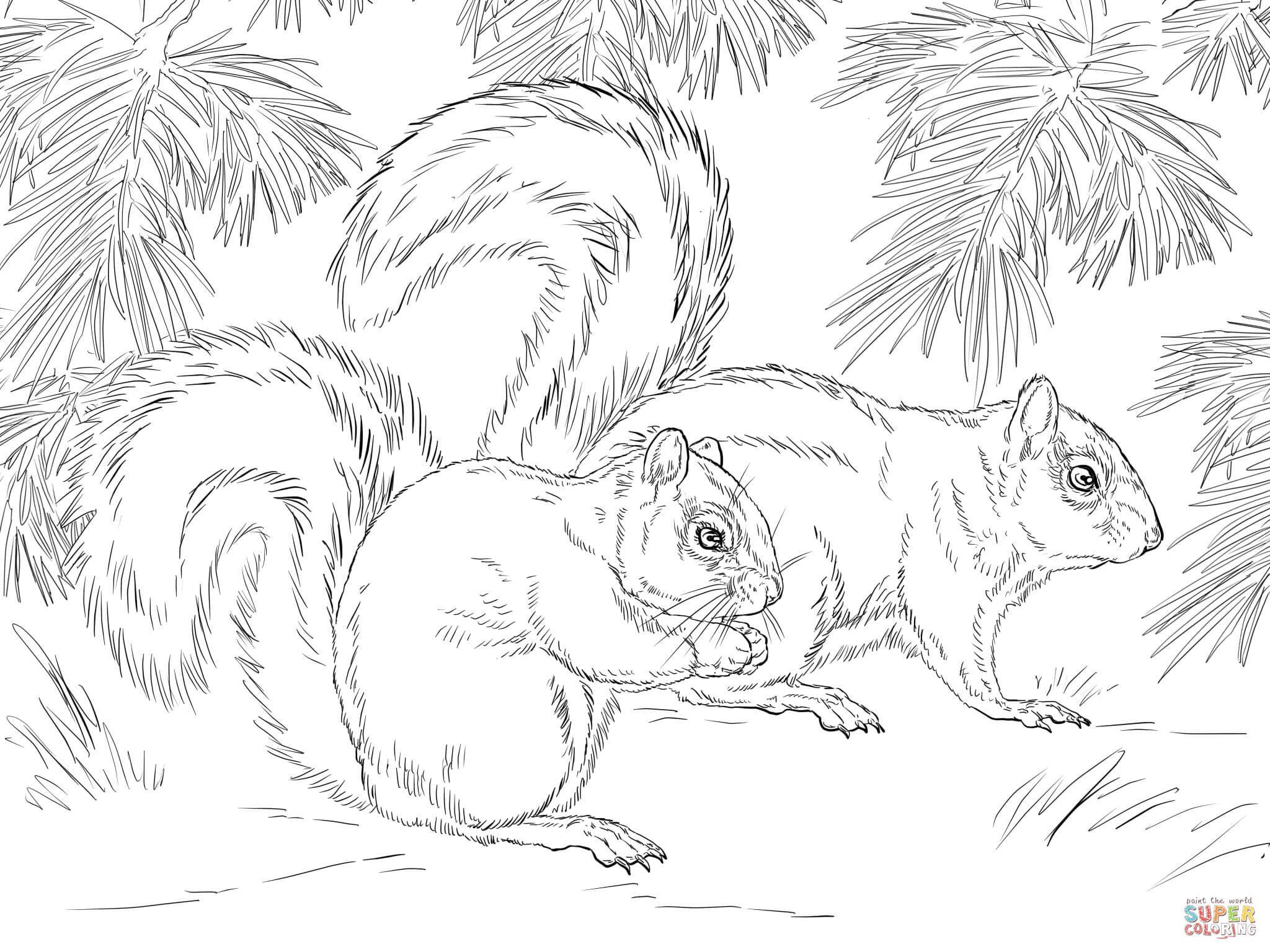 Mexican Fox Squirrel Coloring Page