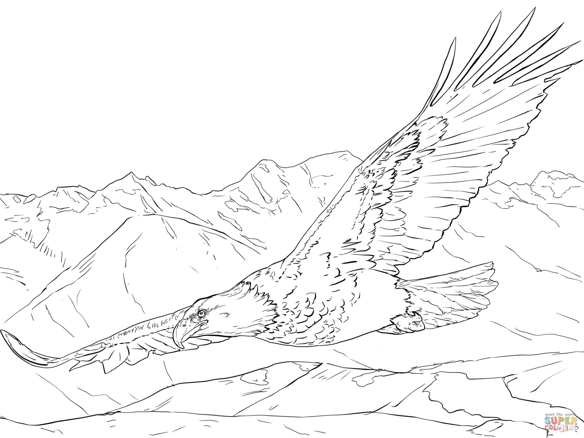 Images About Eagle Coloring Pages Pencil