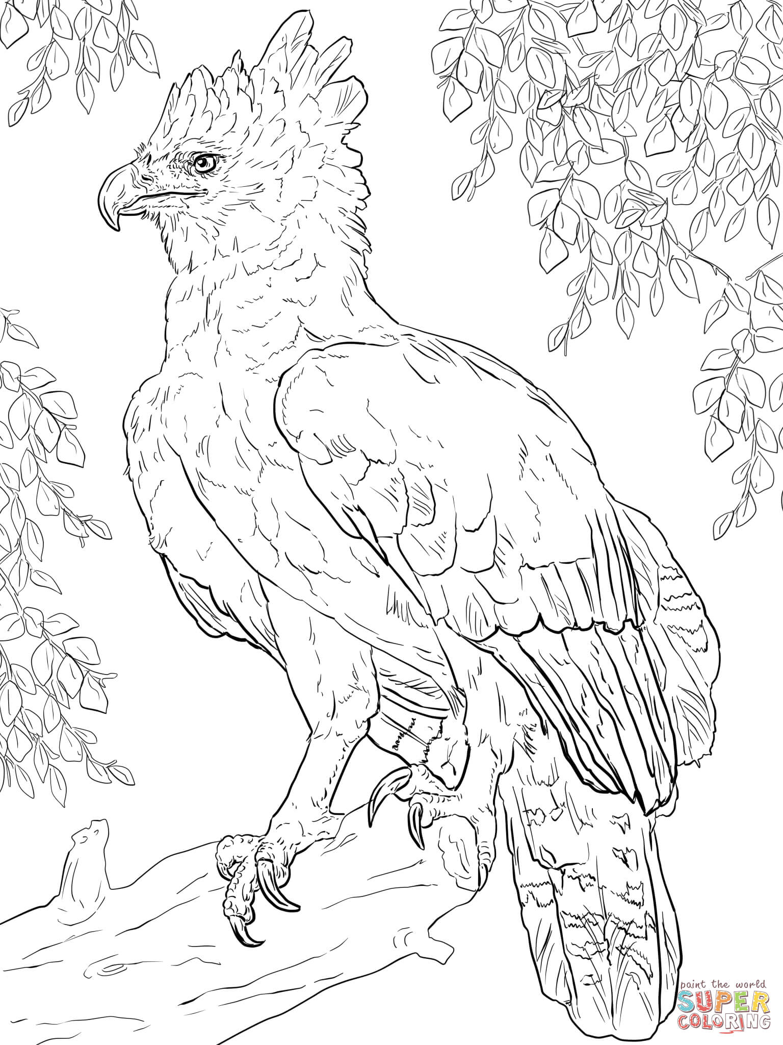Harpy Eagle Perched On A Branch Coloring Page