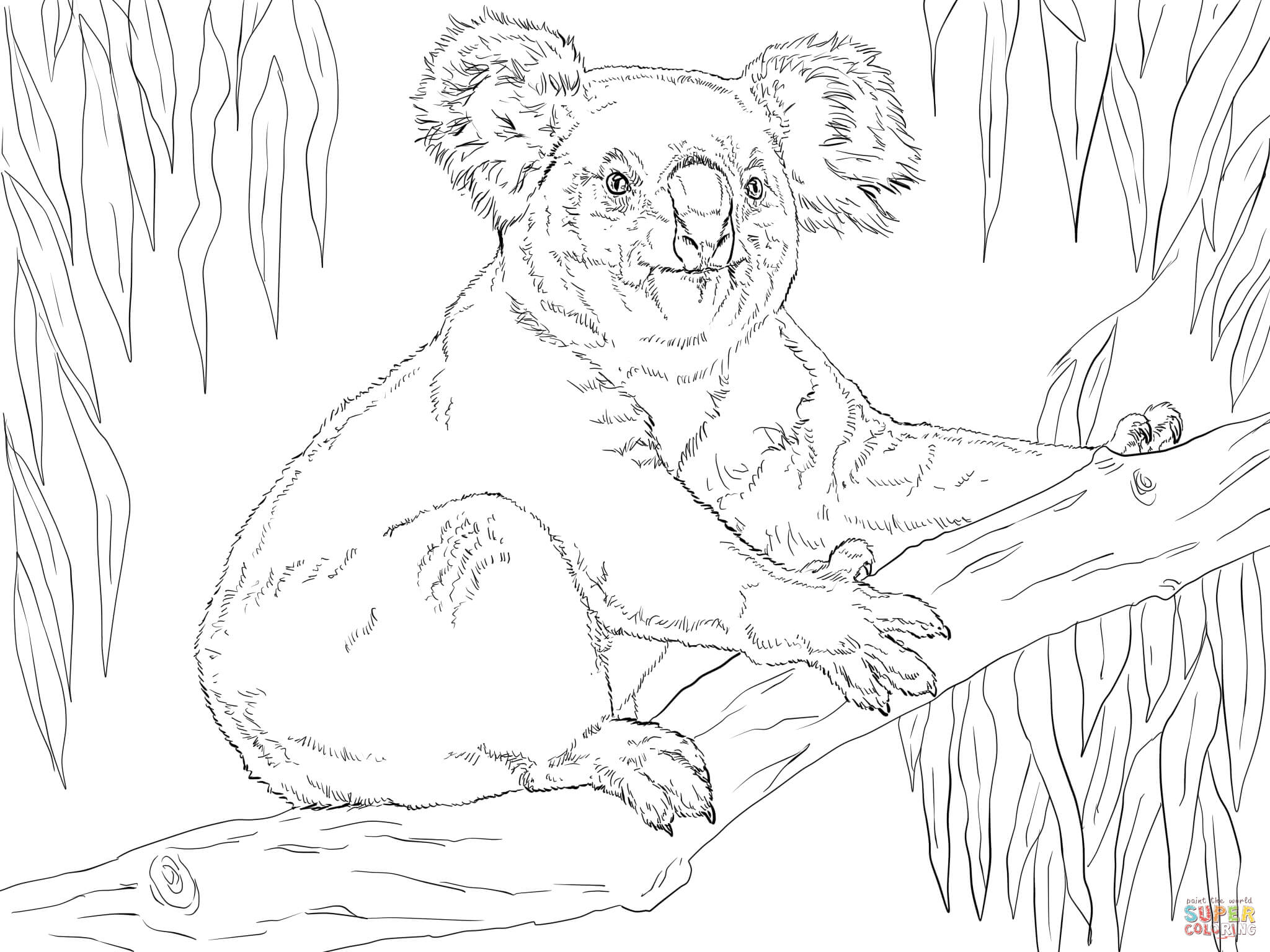 Koala Sits On A Branch Coloring Page