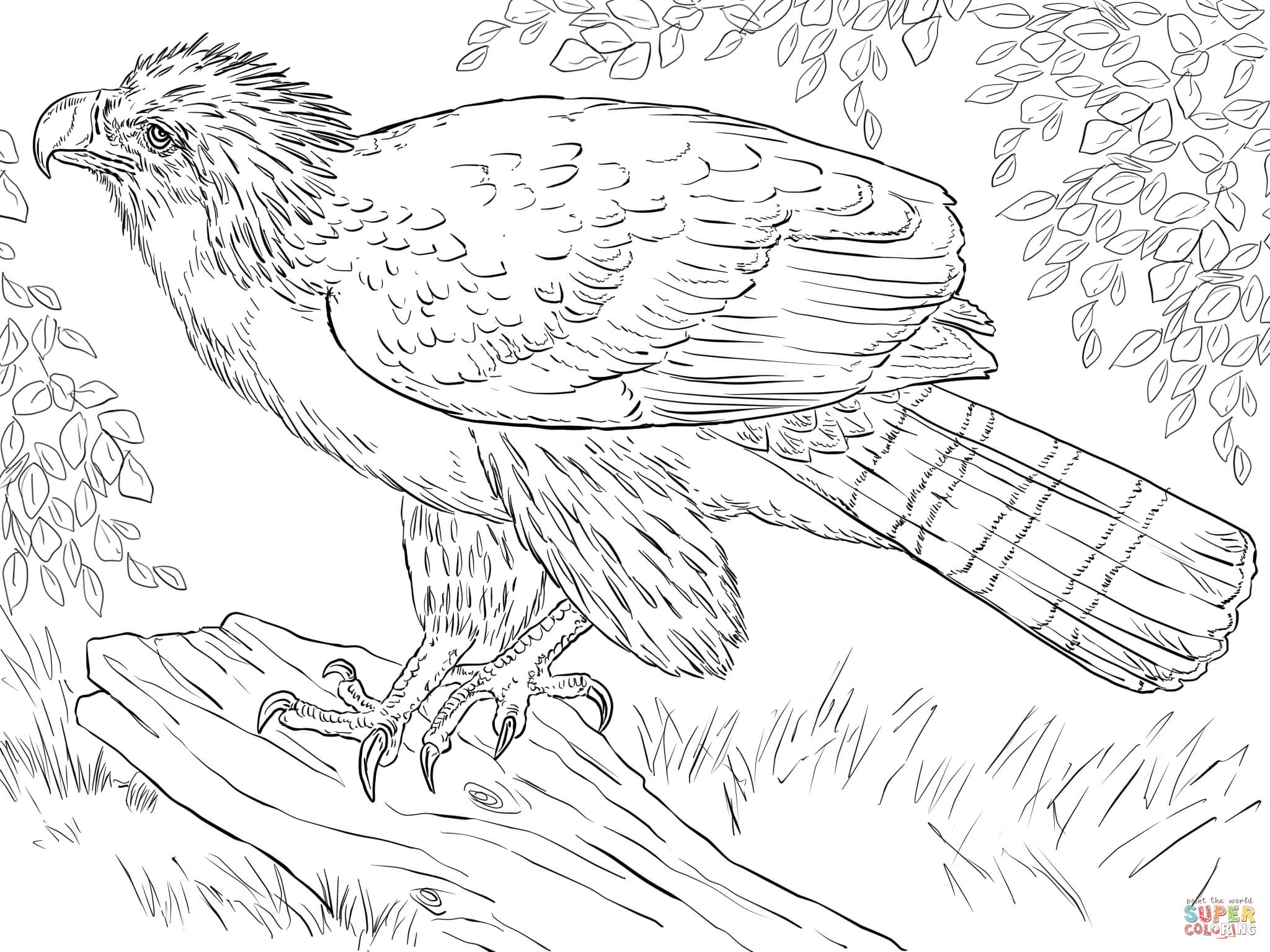 Dibujo De Aguila De Filipinas Posada Sobre Una Rama Para