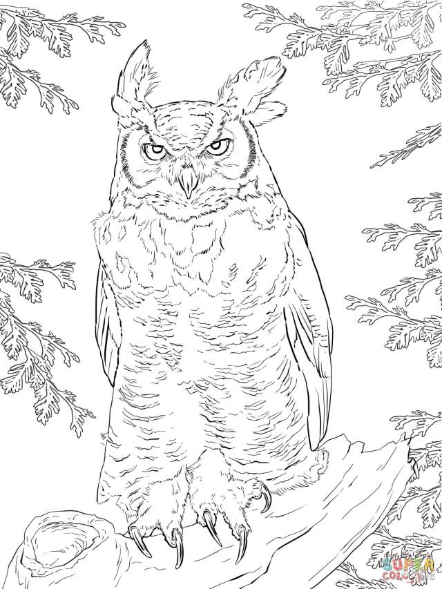 Realistic Great Horned Owl coloring page  Free Printable Coloring