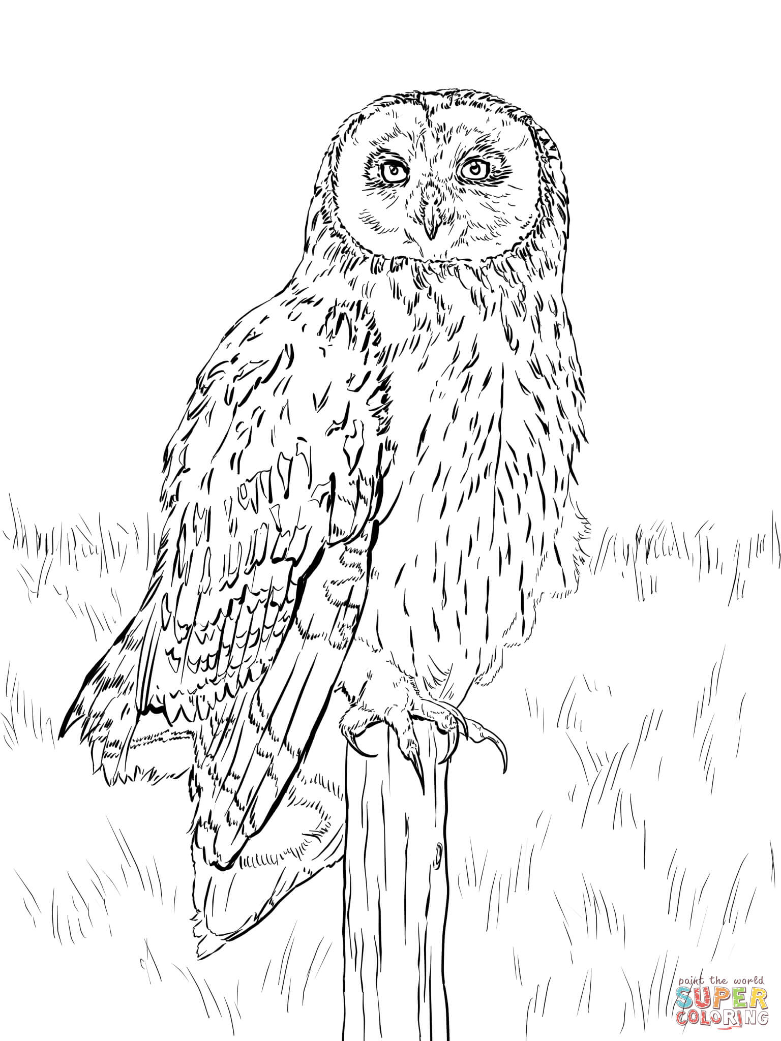 Short Eared Owl Coloring Page