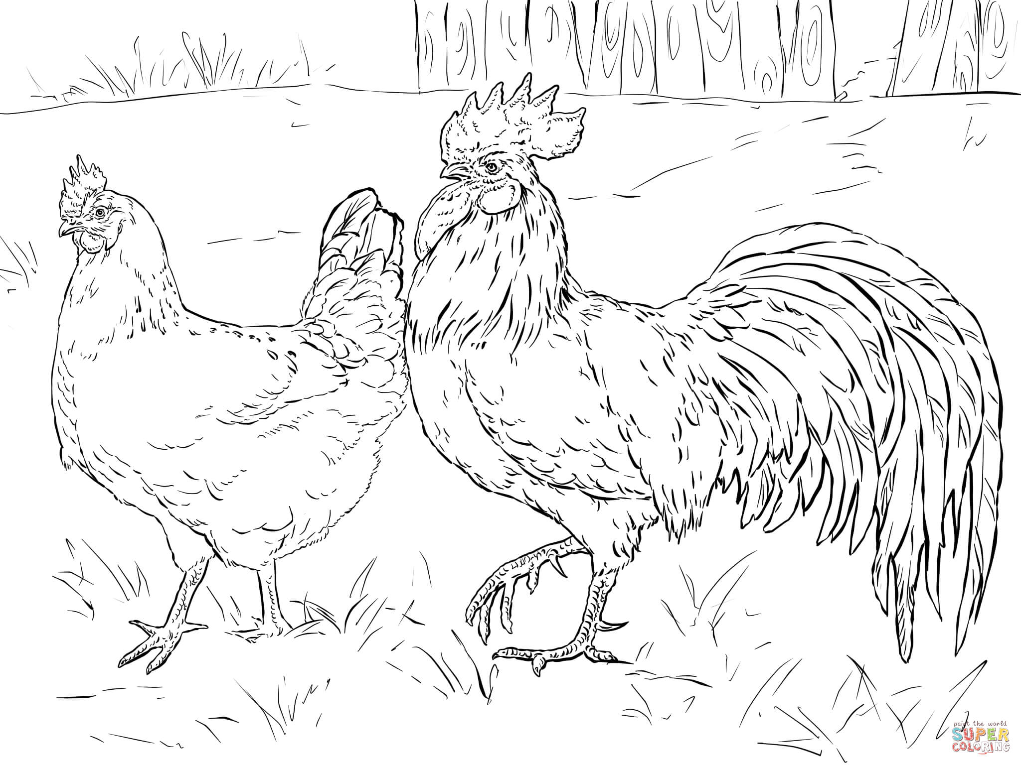 Hen And Rooster Coloring Page
