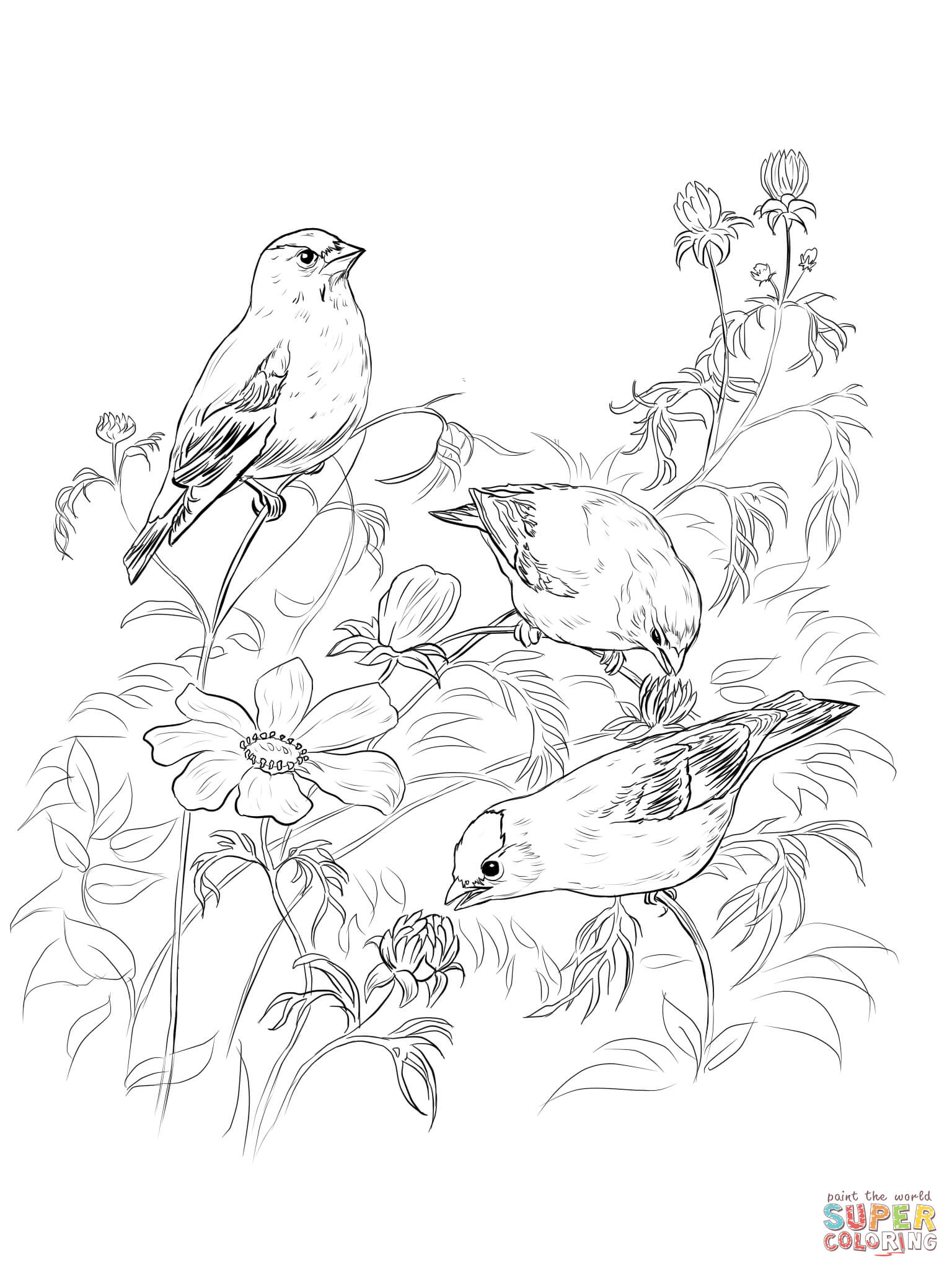 American Goldfinches Coloring Page
