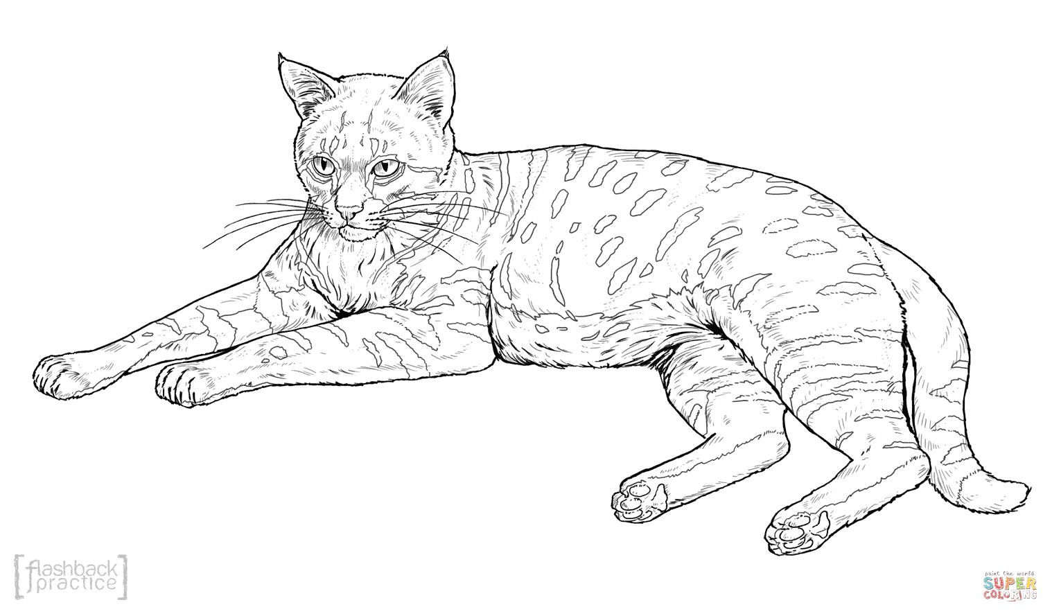 Black Footed Cat Coloring Page