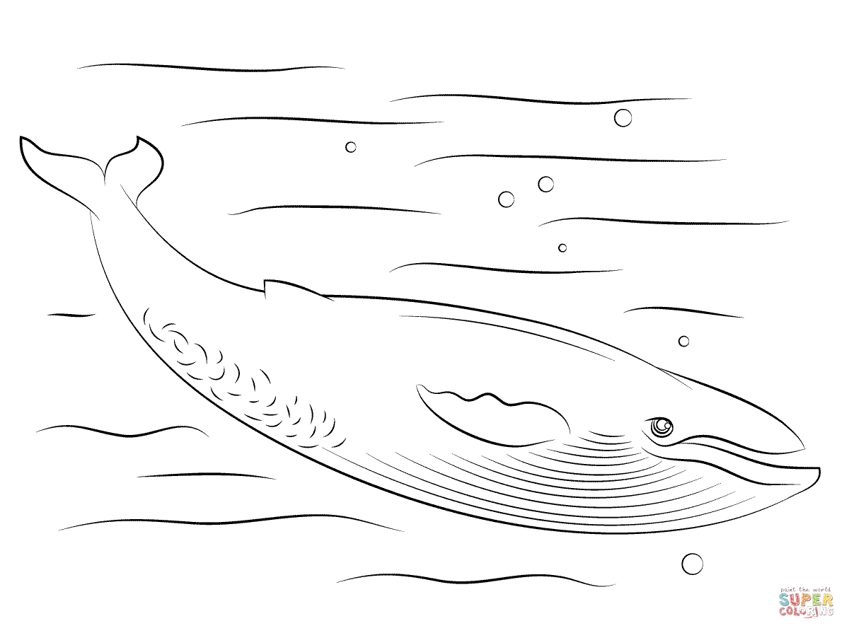 Cute Blue Whale Coloring Page