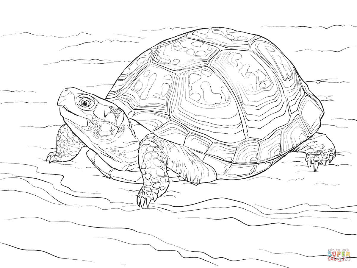 Cute Eastern Box Turtle Coloring Page