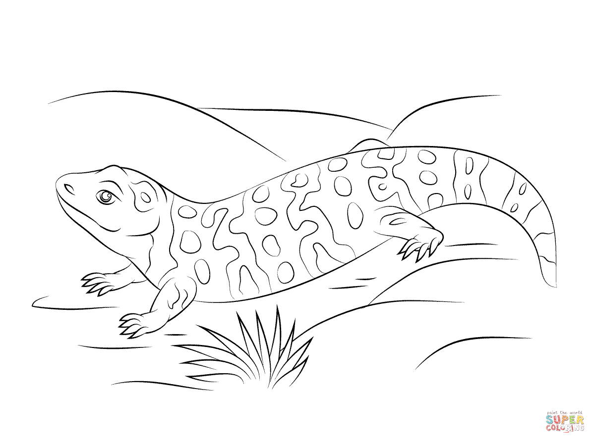 Cute Gila Monster Coloring Page