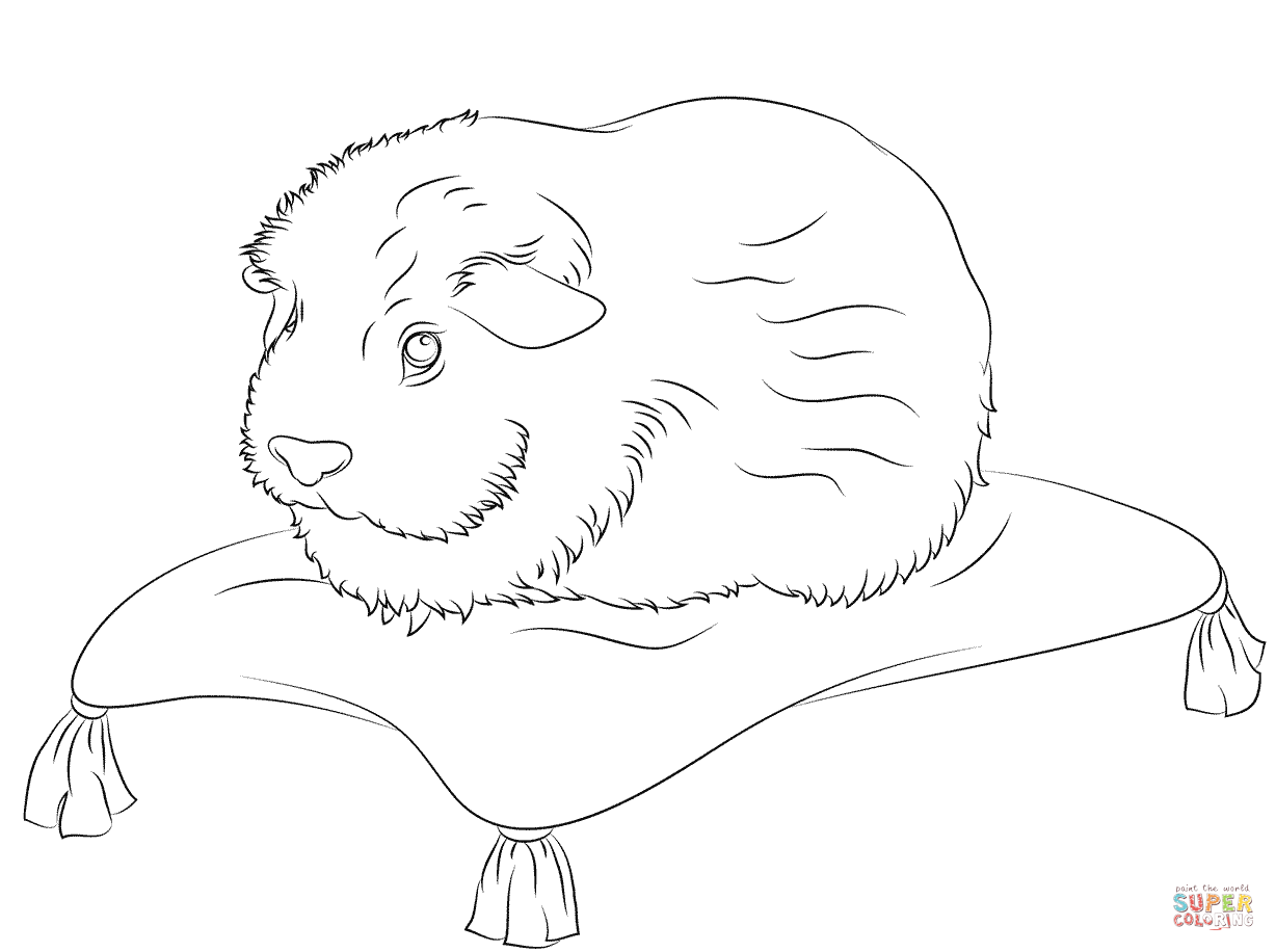 Guinea Pig Printable Coloring Pages