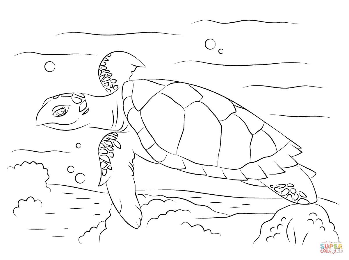 Desenho De Tartaruga De Pente Fofinha Para Colorir
