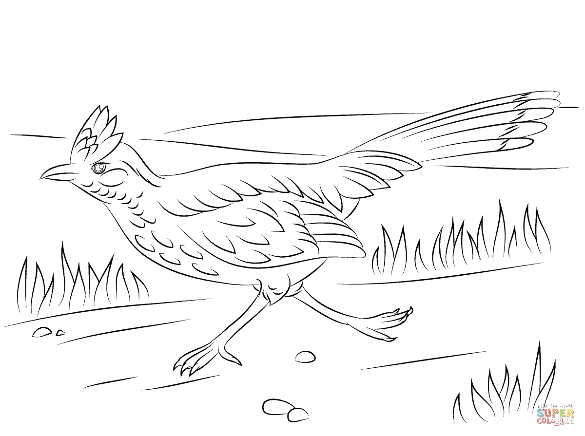 Greater Roadrunner On The Run Coloring Page