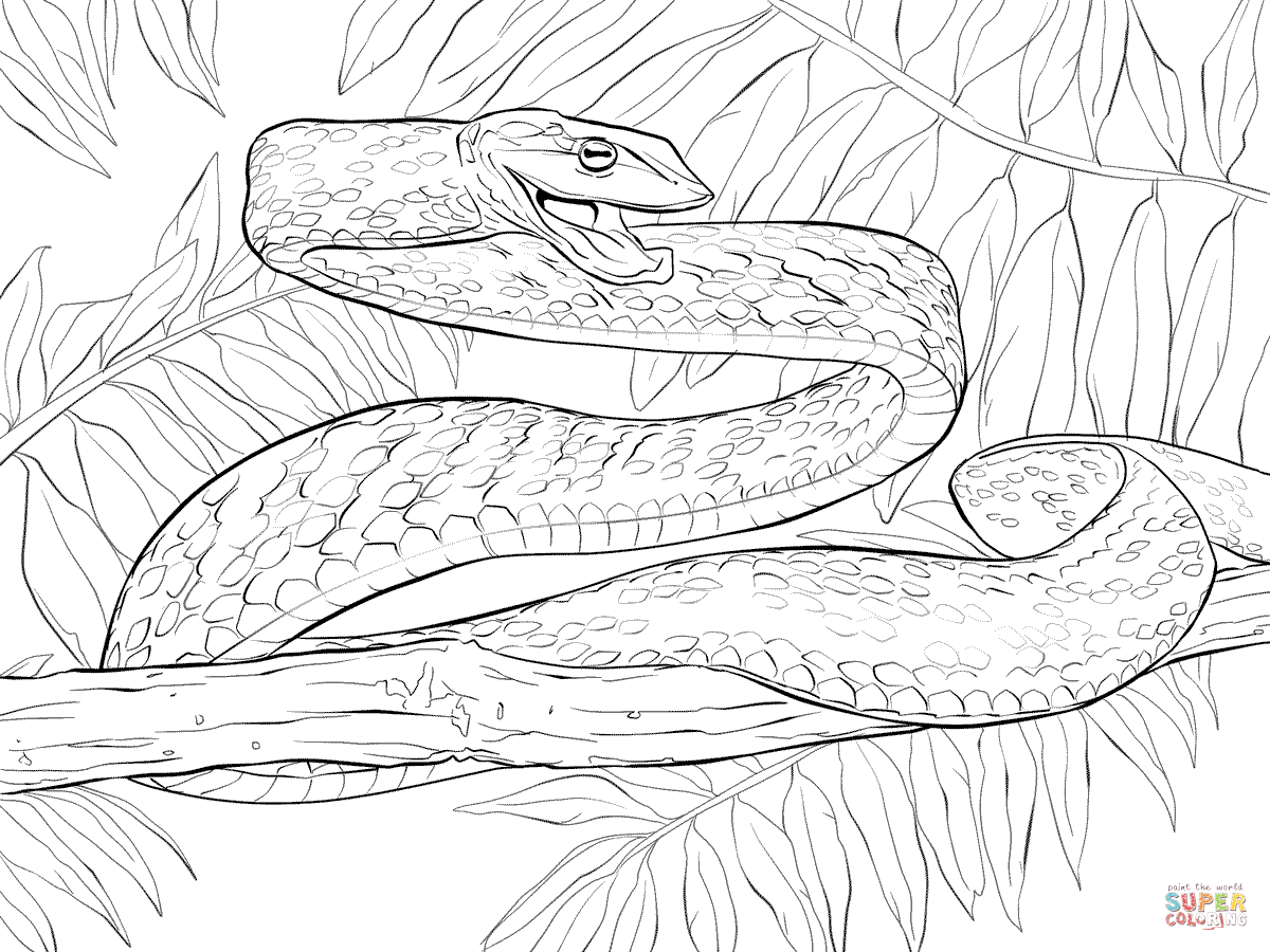 Snakes Coloring Pages
