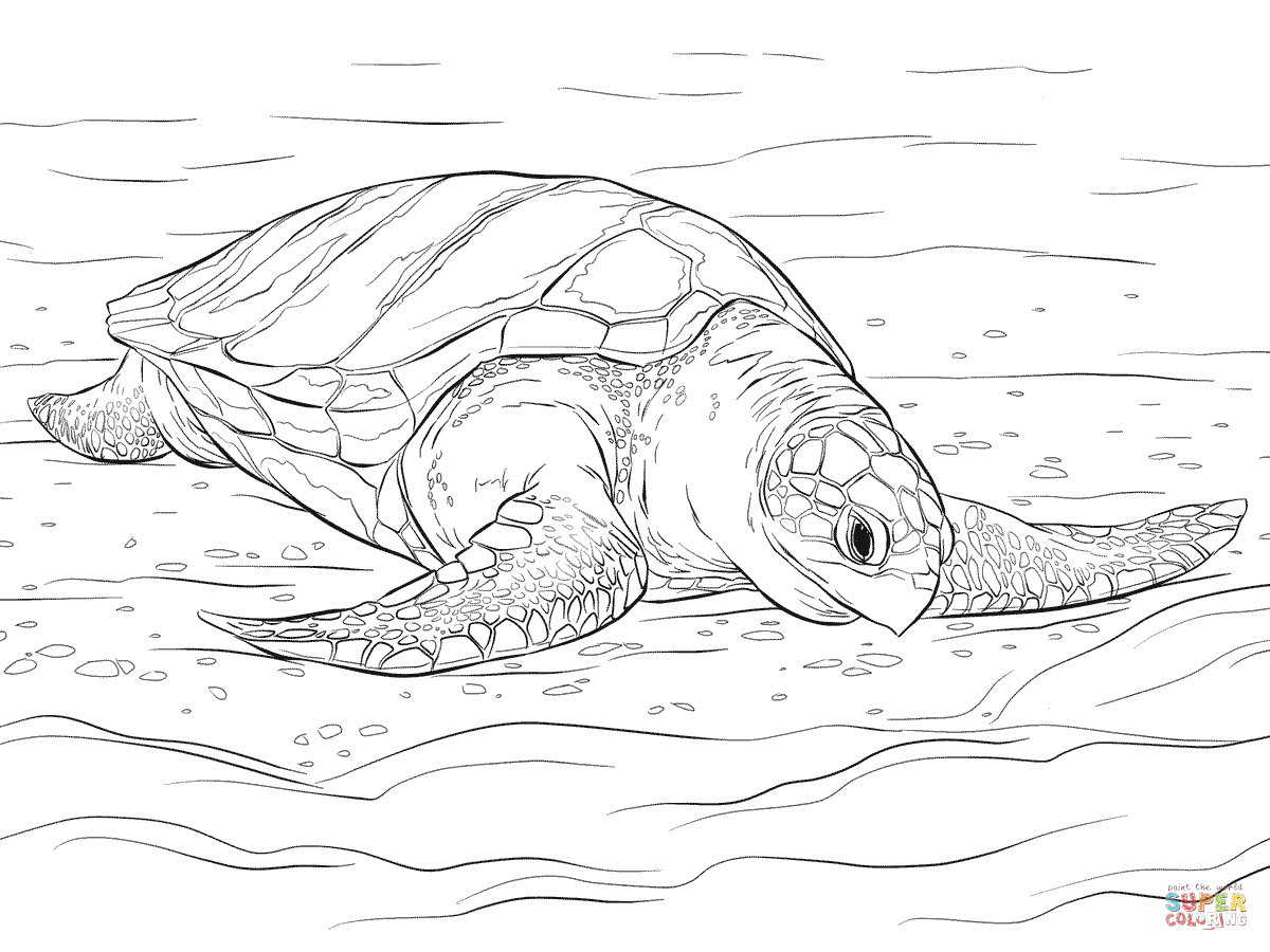 Olive Ridley Sea Turtle Coloring Page