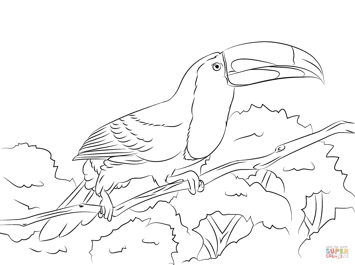 Perched Keel Billed Toucan Coloring Page