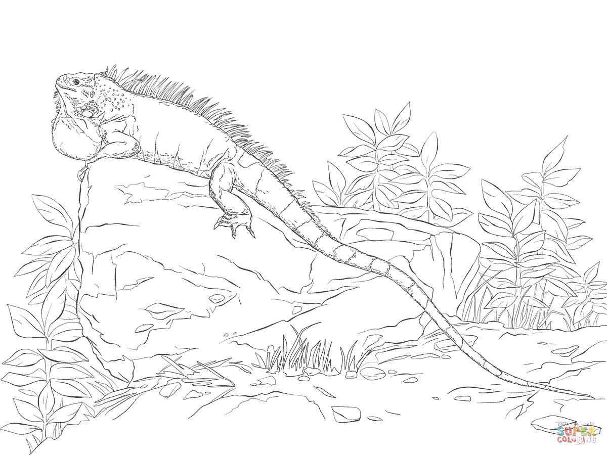 Iguana Printable Coloring Pages