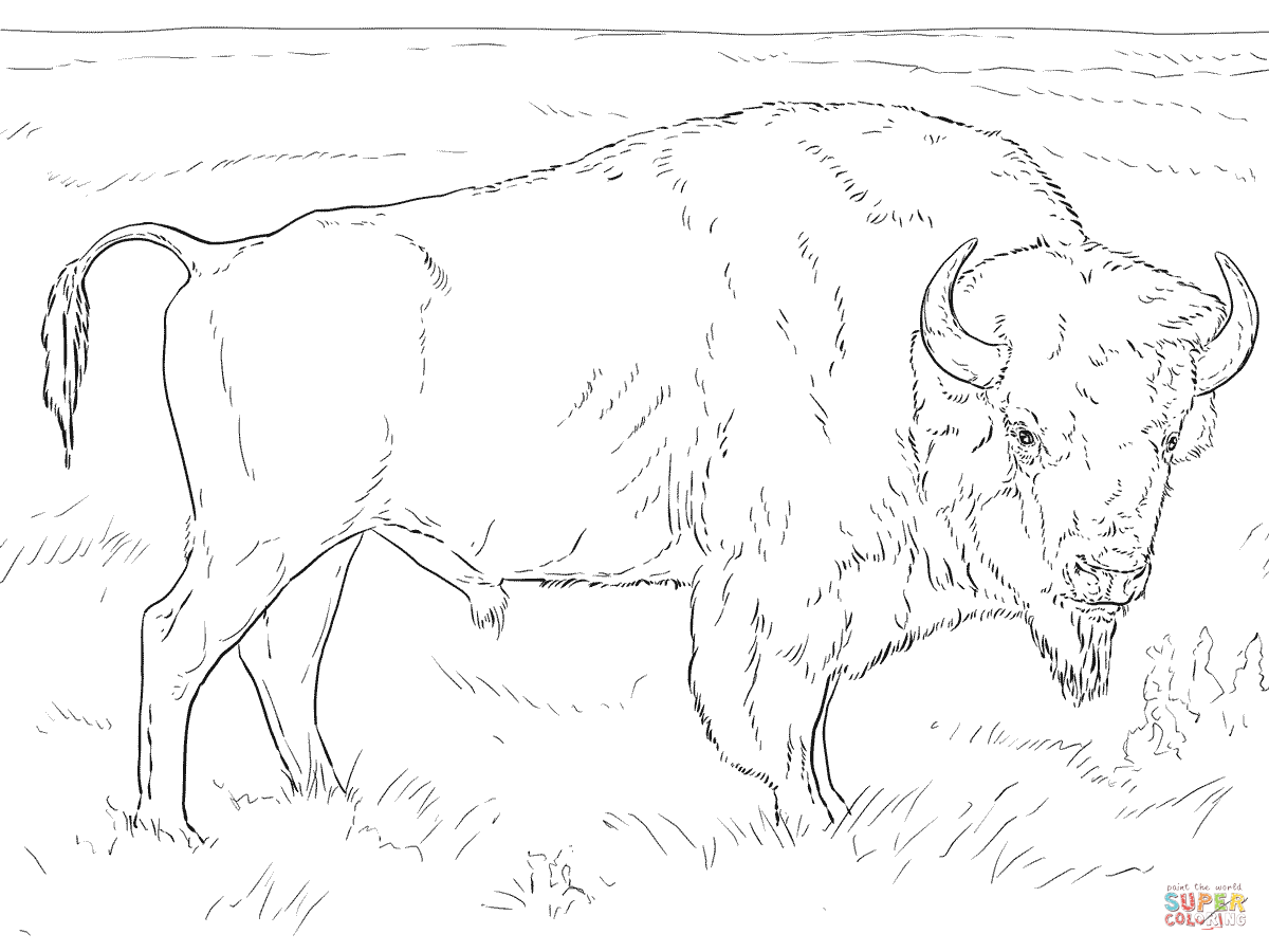 Realistic American Bison Coloring Page