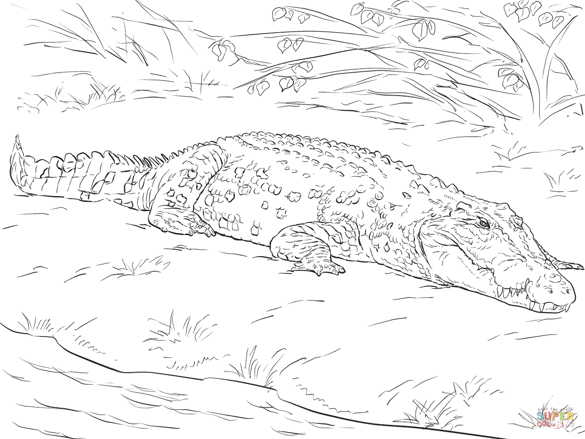 Realistic Australian Saltwater Crocodile Coloring Page