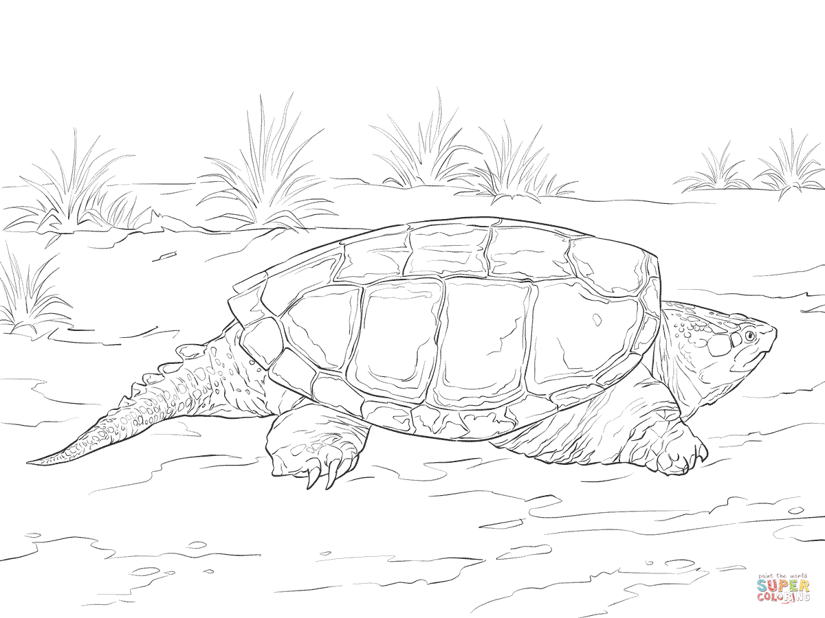 Realistic Common Snapping Turtle Coloring Page
