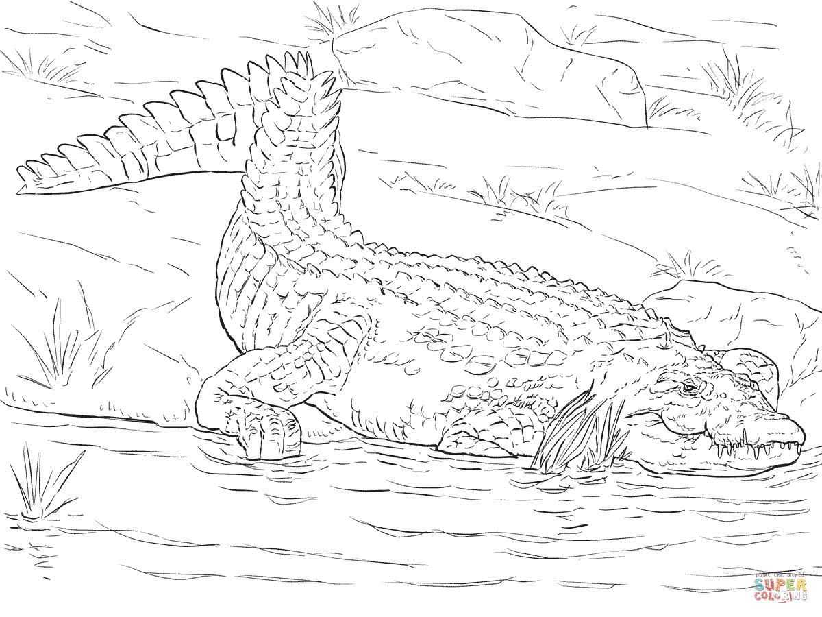 Realistic Nile Crocodile Coloring Page