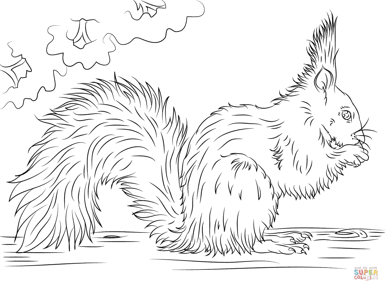 Red Squirrel Eating Nut Coloring Page
