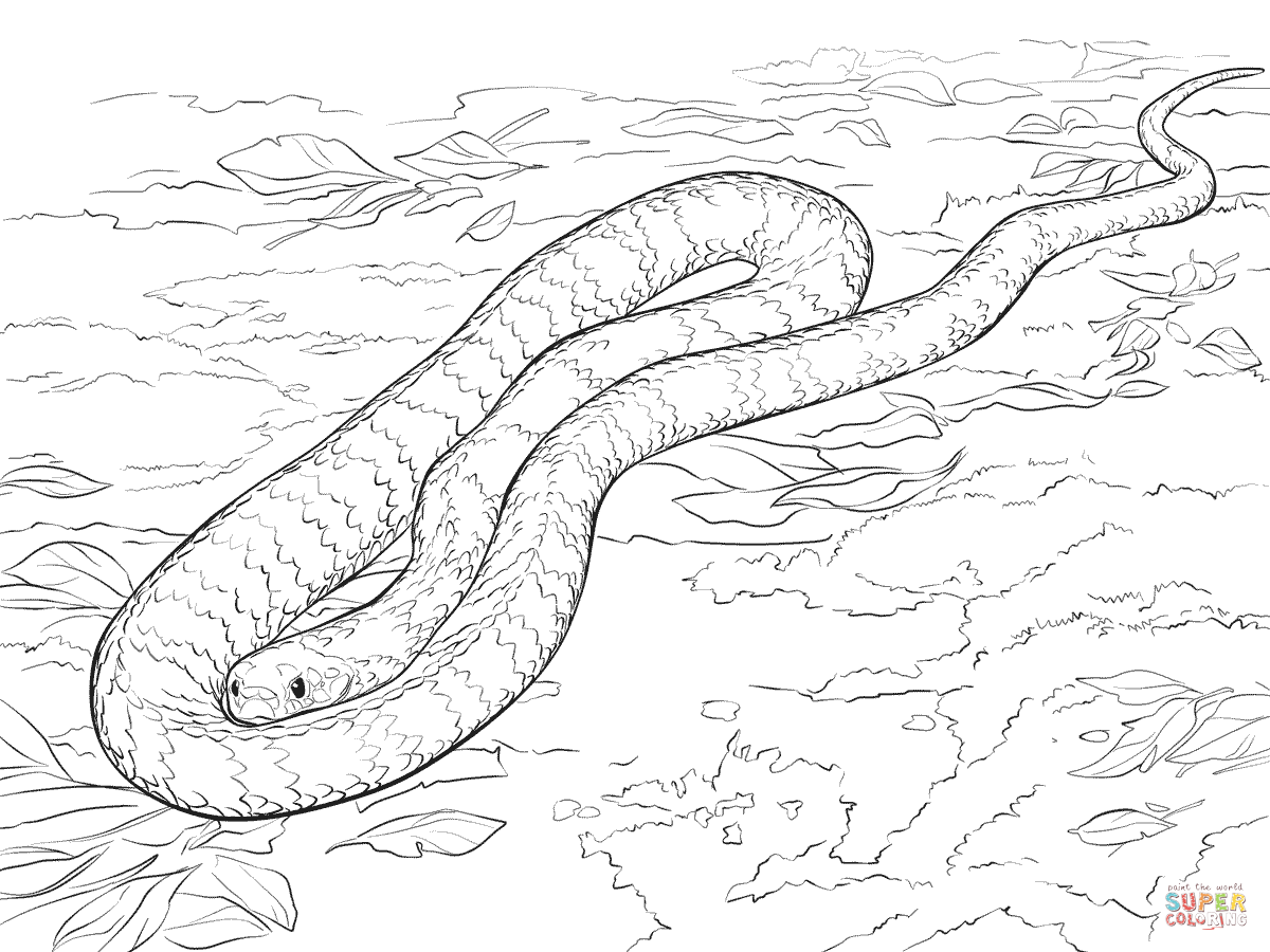Tiger Snake Coloring Page