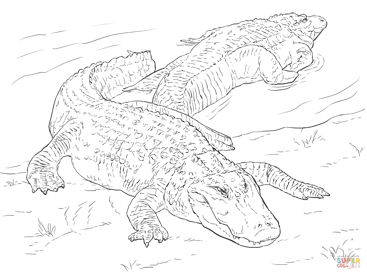 Two American Alligators Coloring Page