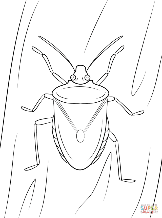Brown Marmorated Stink Bug coloring page  Free Printable Coloring