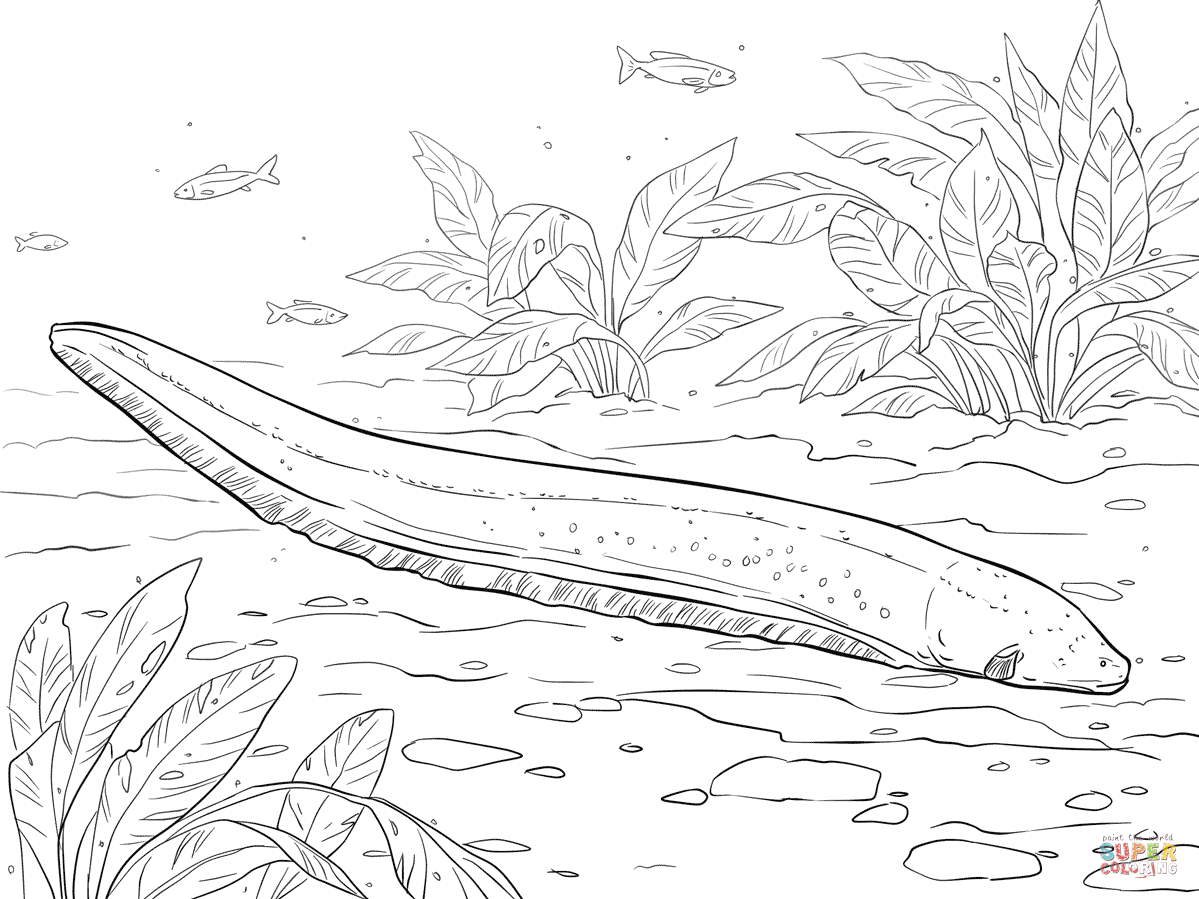 Electric Eel Coloring Page