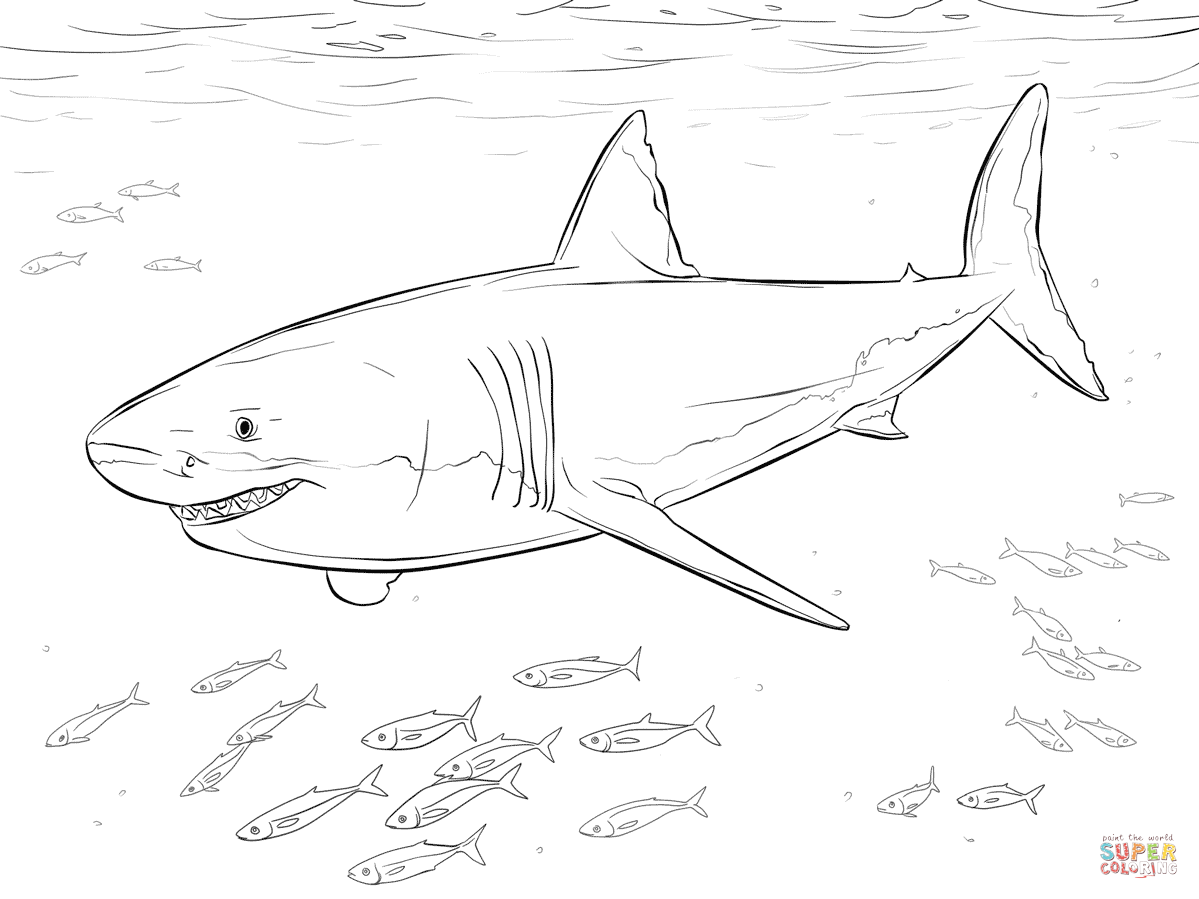 Great White Shark With Pilot Fishes Coloring Page